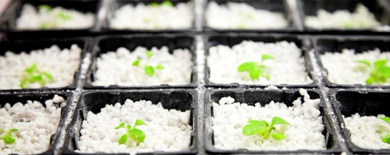 Laboratory growing arabidopsis